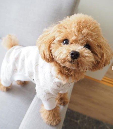 kadınlar için en ideal köpek irkları 8