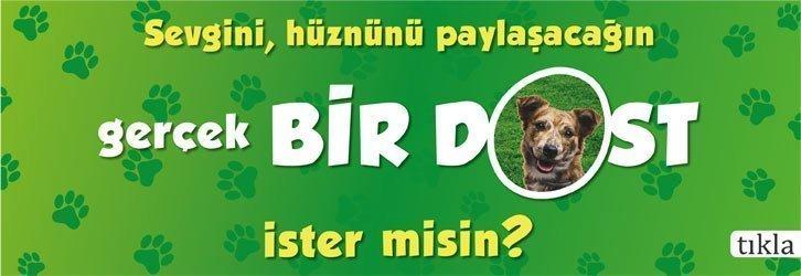 Köpek Dünyası