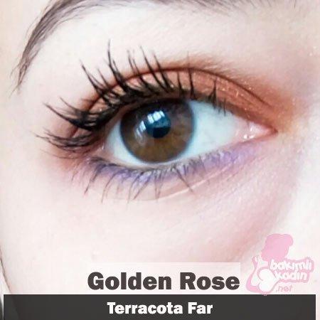 golden rose terracota far 2