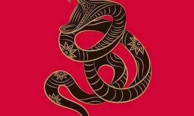 detaylarıyla yılan burcu özellikleri 29kasım - 17aralık 10